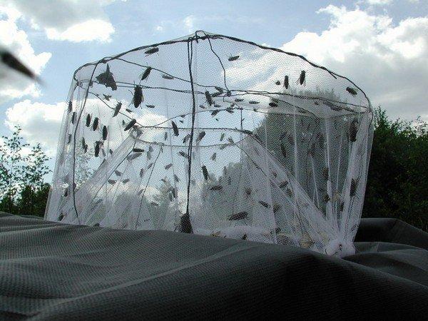 Что делать если укусил слепень. Овод: как отпугивать насекомое и что делать при укусе