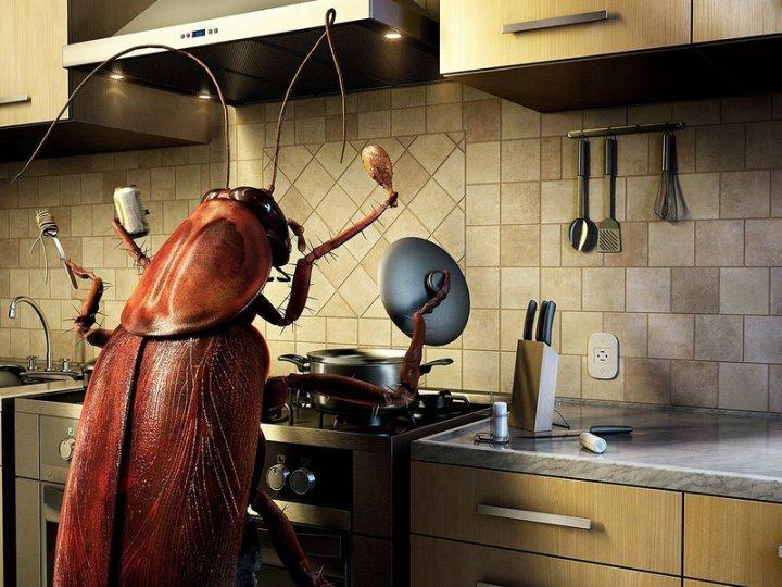 Где есть тараканы там не будет клопов